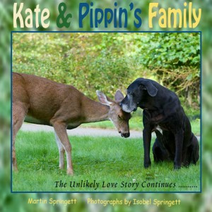K and P cover 7 copy copy